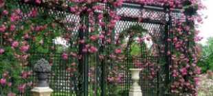 Шпалеры для роз и вьющихся растений
